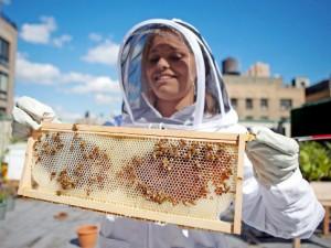apiculture-en-avant