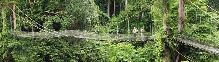 écotourisme en malaisie_Bridge to the rainforest